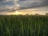landbouw (3)